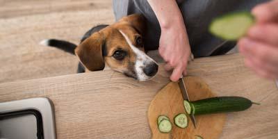 Cane e cetrioli