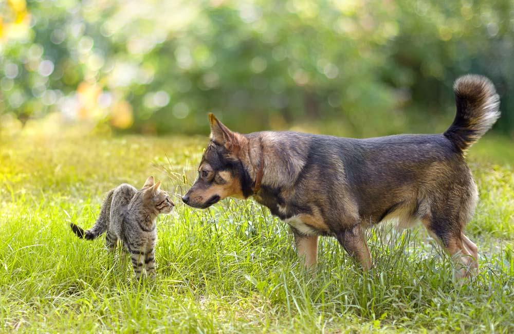 Cane e gatto si annusano